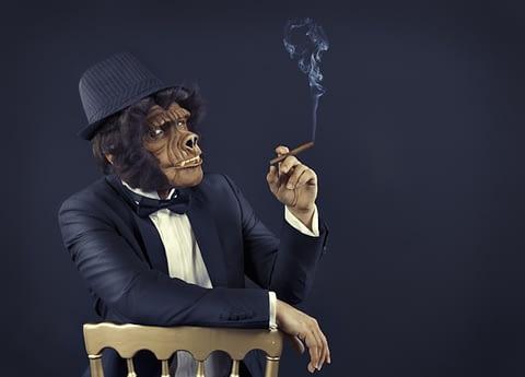 goril takım elbise puro sigara tehdit fotoğrafçı prodüksiyon tasarım proje kretif creative çekim fotoğraf fotoğrafçı reklam photoshop retouch studyo