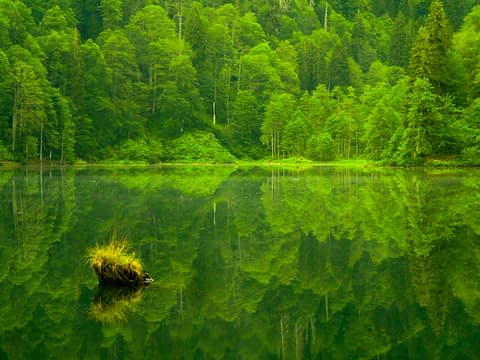 borçka karagö karadeniz yeşil göl manzara