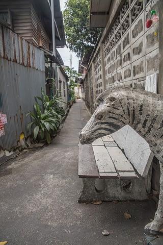 zebra sokak garip yol dar komik