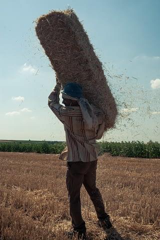 işçi tarım balya saman portre