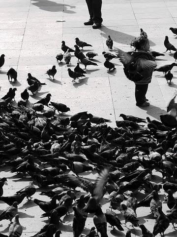 melek çocuk masum temiz güvercin kuşlar kız S&B