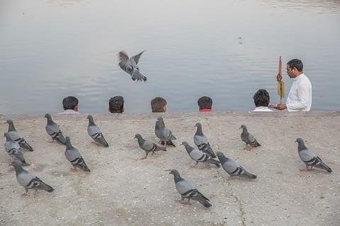 kafa kanat sıra güvercin hindistan komik kreatif