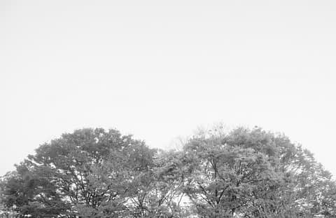 ağaç göğüs ikiz sanat art