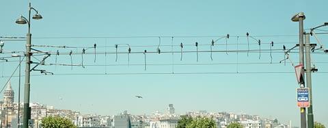 9 senfoni mozart direk tel güvercin nota eminönü istanbul fotoğrafçı prodüksiyon tasarım proje kretif creative çekim fotoğraf fotoğrafçı reklam photoshop retouch studyo