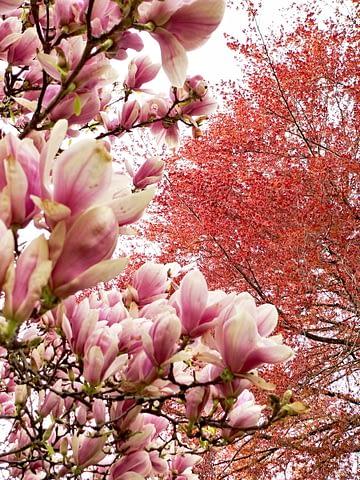 bahar çiçek ağaç renk pembe turuncu doğa canlı manzara ilkbahar
