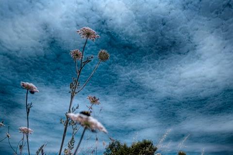 buz gökyüzü çiçek