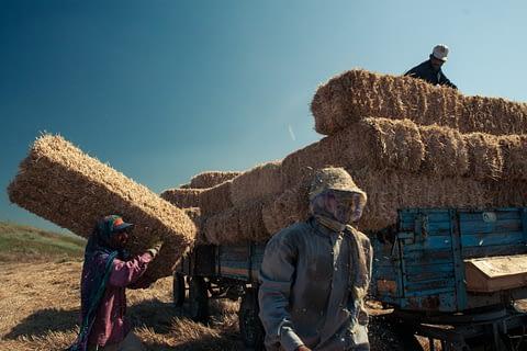 balya saman işçi tarın sezonluk roman