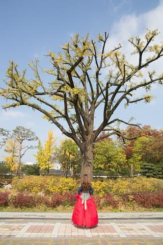 ağaç sap doğa birleşme kadın geleneksel kore bahar sanat art