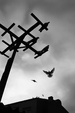 güvercin çatı uçuş S&B